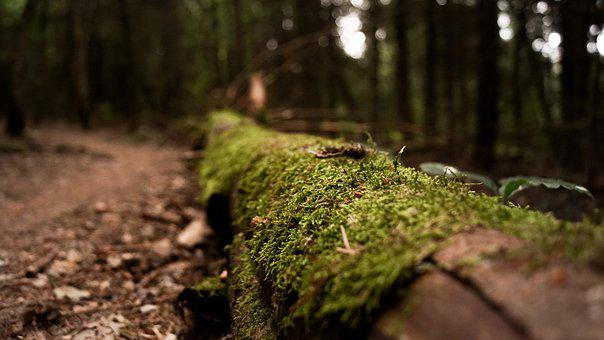 Forest, Spring, Nature, Forest Floor, Trees, Plant