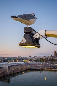 Seagull, Bird, Sea, Estonia, Wing, Flying, Animal