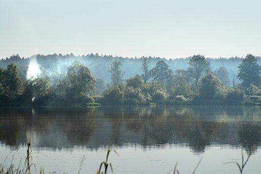 Tree, Smoke, The Fog, Forest, Nature, Landscape, Wood