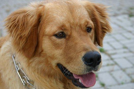 Dog, Pasha, Animal, Animals, Street, Scott, Cute