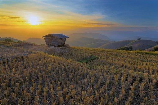 Asia, Beautiful, Chiang Mai Thailand, Plant