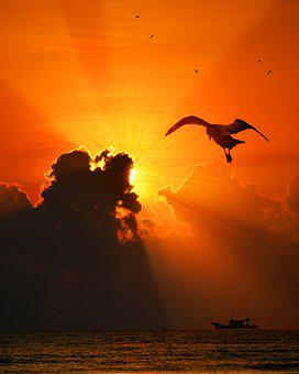 Sea, Bird, Sunset, Nature, Water, Natural, Animal