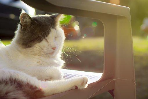 Cat, Animal, Domestic Animal, Animals, Cat Face