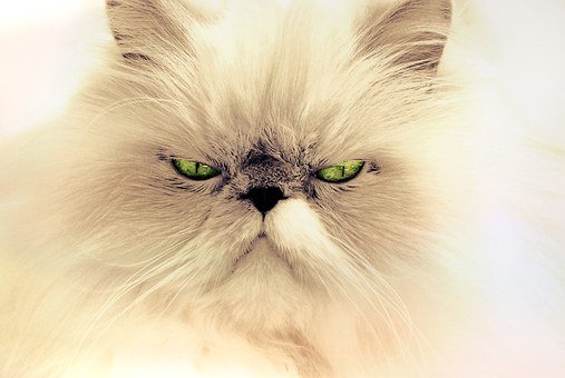 Cat, Animal, Cat Portrait, Pet, Domestic Cat