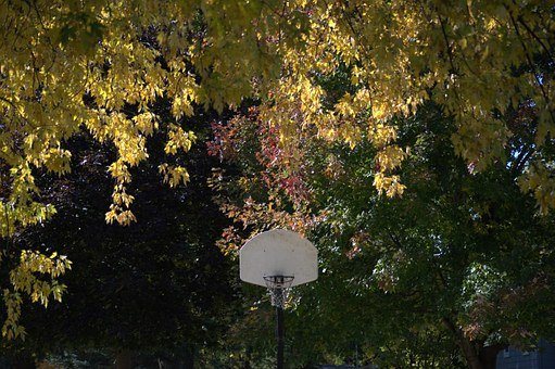 Hoop, Basket, Basketball, Still, Leaves, Fall, Color