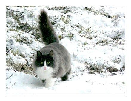Cat, Animal, Snow, Pet, Cat Face, Head, Domestic Cat