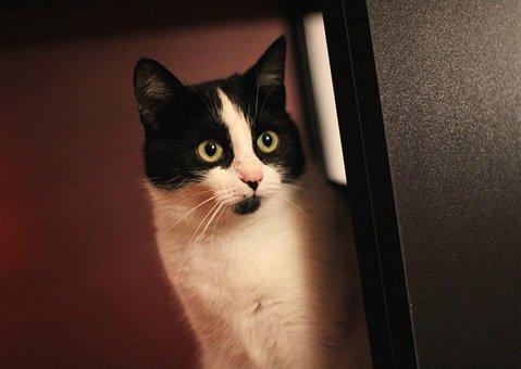 Cat, Kitten, Pet, Animal, Fur, Eyes, Vet, Favorite