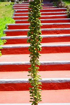 Agave, Inflorescence, Plant, Stairs, Red, Green