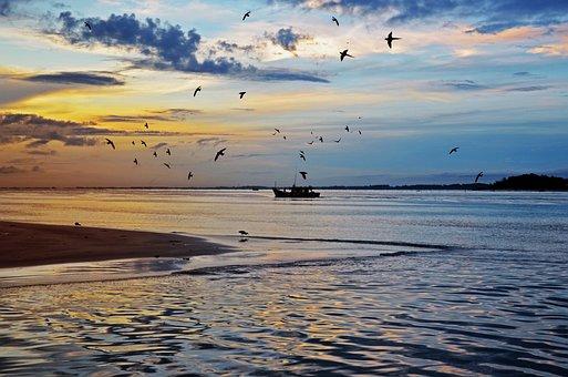 Sea, Birds, Sunrise, Blue, Nature, Water, Natural