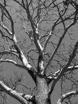 Tree, Dead, Winter, Branches, Lifeless, Ecology, Nature