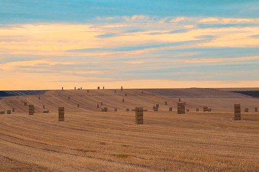 Harvest, Straw, Fields, Agriculture, Landscape, Nature