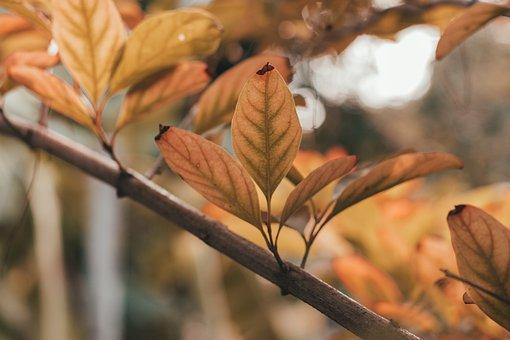 Thailand, Autumn Leaves, Summer, Asia, Nature, Spring