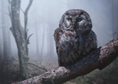 Owl, Bird, Forest, Branch, Night, Fog, Eyes, Yellow