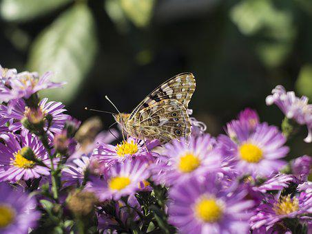 Butterfly, Wing, Flower, Flowers, Insect, Summer