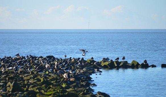 North Sea, Stones, Coastal Protection, Water