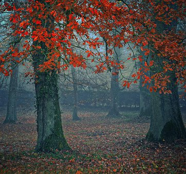 Autumn, Trees, Forest, Fall Foliage, Red, Log, Park