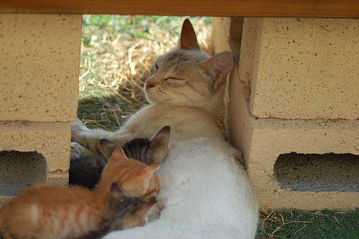 Mammal, Cat, Breastfeed, Felines, Kitten, Pet, Cute