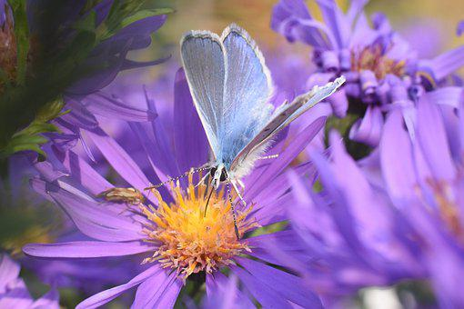 Butterfly, Flower, Blue, Insect, Bloom, Autumn, Flora