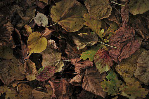 Autumn, Foliage, Collapse, Brown, Oct, Dry, Leaf