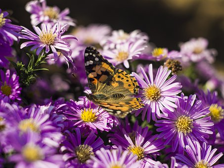 Butterfly, Flowers, Wing, Insect, Garden, Macro, Summer