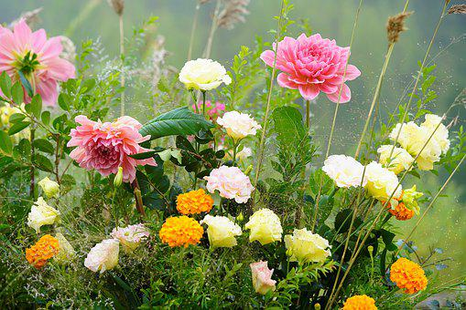 Flower, Garden, Rose, Flowers, Nature, Plants, Summer