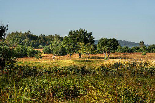 Meadow, Field, Landscape, Plant, Summer, Grass, Garden