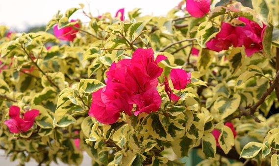 Flowers, Flora, Garden, Leaf, Floral, Blooming, Outdoor