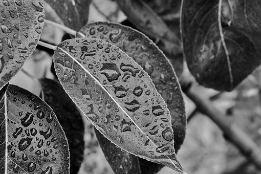 Fall, Winter, Black, White, Leaf, Drop, Water, Nature