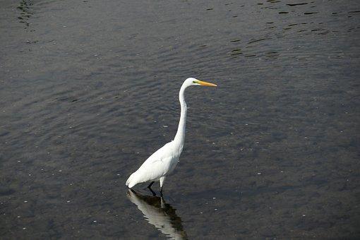 Bird, Egret, Nature, Feather, White, Landscape, New