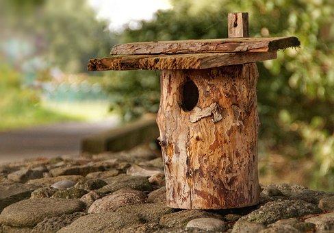 Aviary, Nest Cavity, Nest, Breed, Songbird, Birds