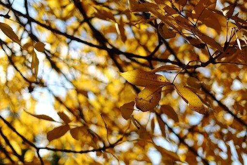 Foliage, Leaf, Autumn, Seasonal, October, Fall Leaves