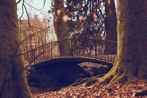 Bridge, Forest, Idyllic, Trees, Park, Pond, Nature