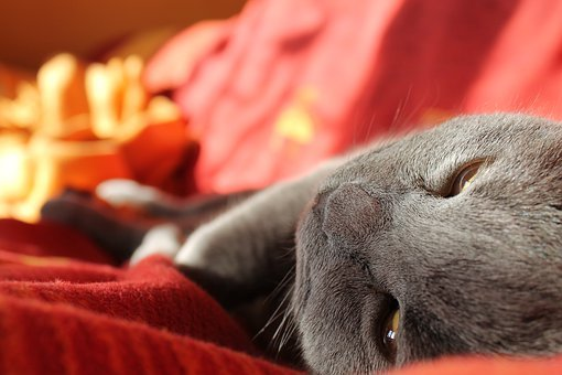 Cat, Relaxation, Rest, Cute, Animal, Sleep, Pet, Kitten
