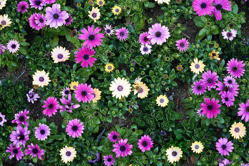 Flower Garden, Purple, White, Flowers, Garden, Plants