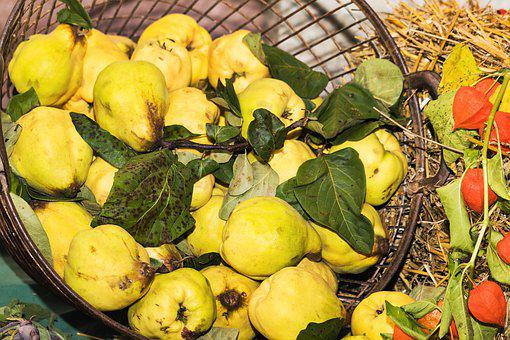 Thanksgiving, Festival, Quince, Fruit, Yellow, Food