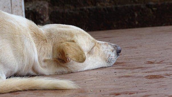 Dog, Sleeping, Puppy, Sleep, Animal, Pet, Cute, Sleepy