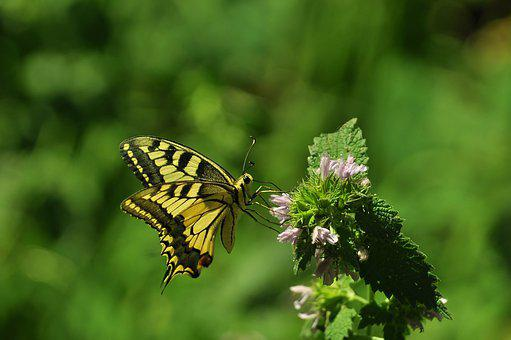 Summer, Butterfly, Flowers, Wing, Green, Insect, Yellow