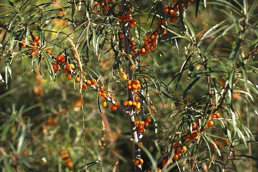 Fruit, Bush, Tasteless, Plant, Garden, Nature, The Plot