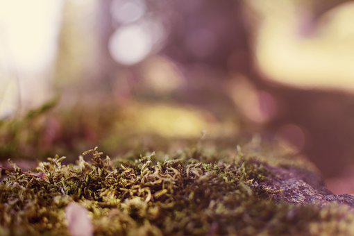 Autumn, Moss, Forest Floor, Forest, Nature, Tree