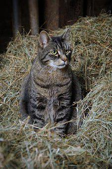 Cat, Straw, Nest, Farm, Mice, Wild, Hunter, Mackerel