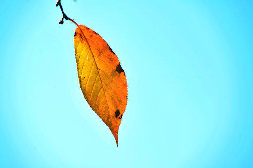 Autumn, Leaves, Sky, The Leaves, Deciduous, Wood