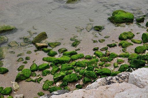 Mediterranean, Israel, Sea, Algae, Moss