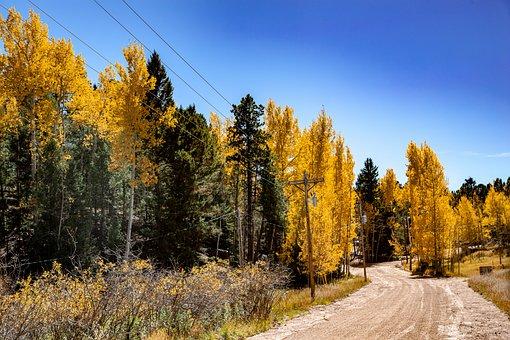 Colorado, Fall, Aspens, Dirt Road, Autumn, Aspen