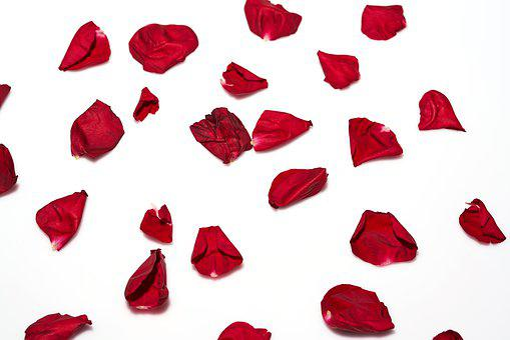 Rose, Leaves, Red, Background, Decoration, Flower