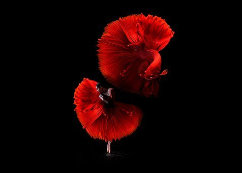 Dancer, Red, Fantasy, Elegance, Ballet, Fish, Surreal