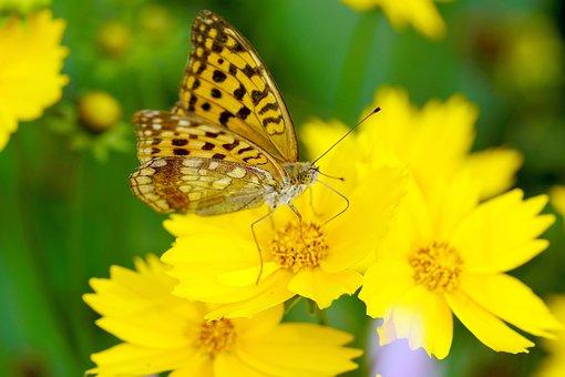 Butterfly, Flower, Flowers, Summer, Yellow, Beautiful