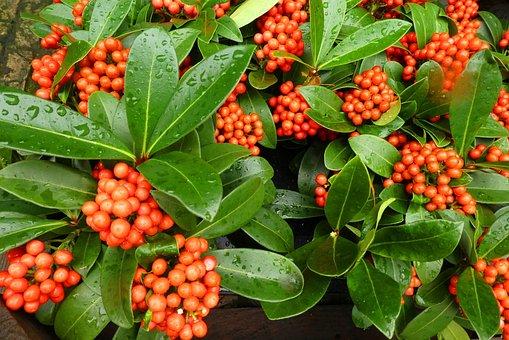 Berries, Orange, Autumn, Colorful, Decoration, Nature