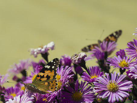Butterfly, Flowers, Insect, Wings, Summer, Flower