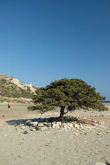 Tree, Trees, Nature, Landscape, Natural, Desert, Sky