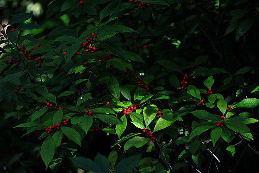 Fruit, Plants, Wood, Autumn, Nature, Red, Flowers